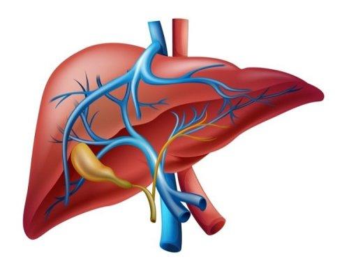 Hígado-gráfico