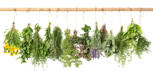 Fresh Herbs Hanging Isolated On White. Basil, Rosemary, Thyme, M