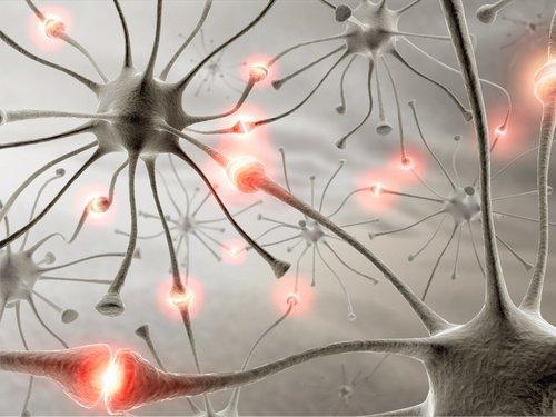 cerebro-sano-500x375